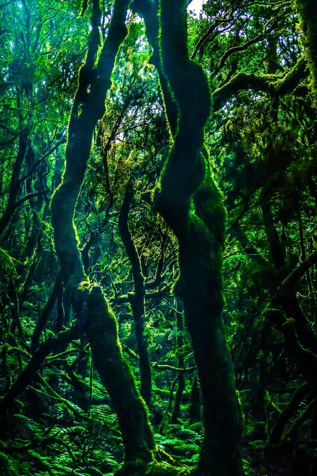 Landschaftsfotografie - Wald auf La Palma